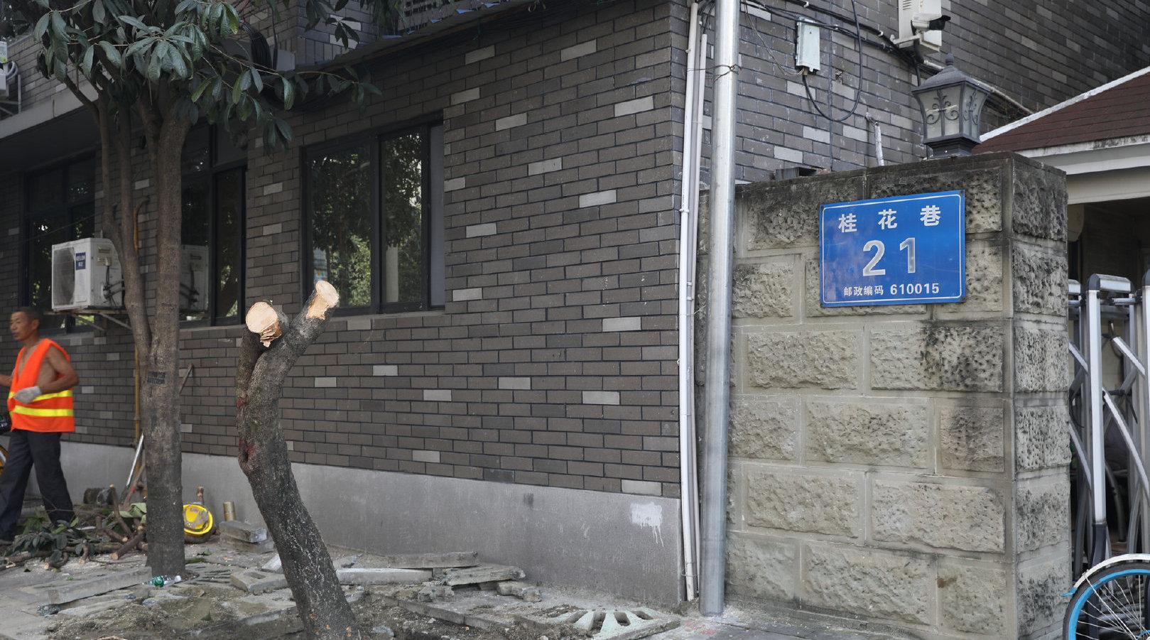 成都桂花巷桂花树被砍光  街道办回应:本打算移走的是少数香樟树