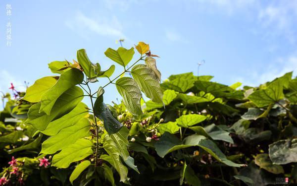 泰国是一年四季都是绿色