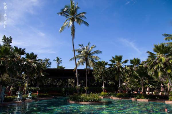 到处可见的椰子树