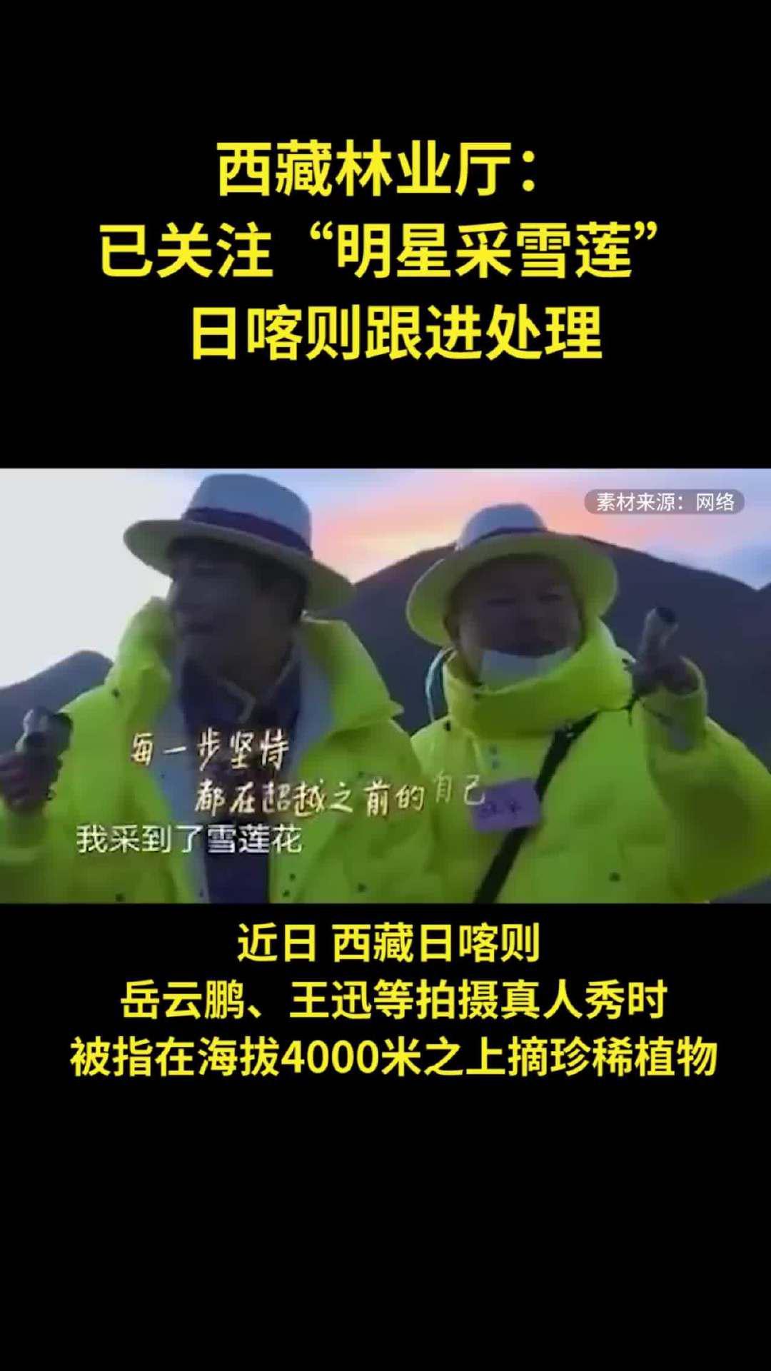 """西藏林业厅:已关注""""明星采雪莲"""",日喀则跟进处理"""