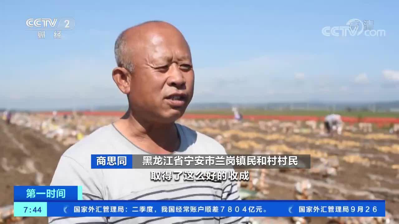 """[第一时间]黑龙江宁安:""""大四化""""技术种植马铃薯 促产量保丰收"""