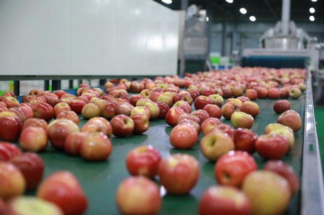 小苹果大产业丨昭通苹果产业发展纪实