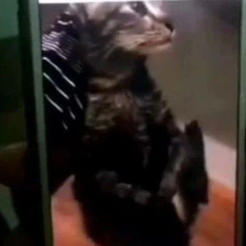 中国男子皮皮岛虐猫被判6个月监禁后遣送回国