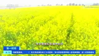 """[第一时间]中国农科院:油菜花四季可""""定制"""""""