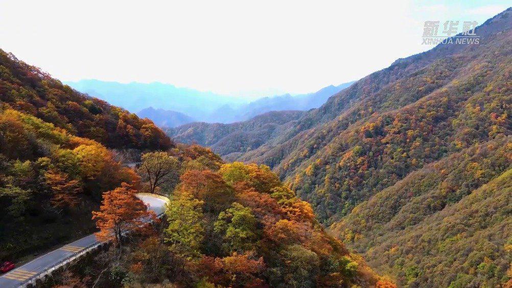 神农架进入秋叶最佳观赏期