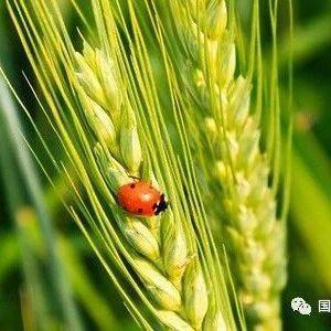 建立分类管理制度 科学应对病虫危害——农业农村部种植业管理司负责人就《一类农作物病虫害名录》答记者问
