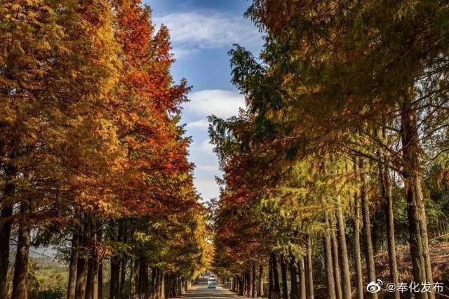 奉化城内弥漫着秋香 层林尽染的油画视觉又浓了一分