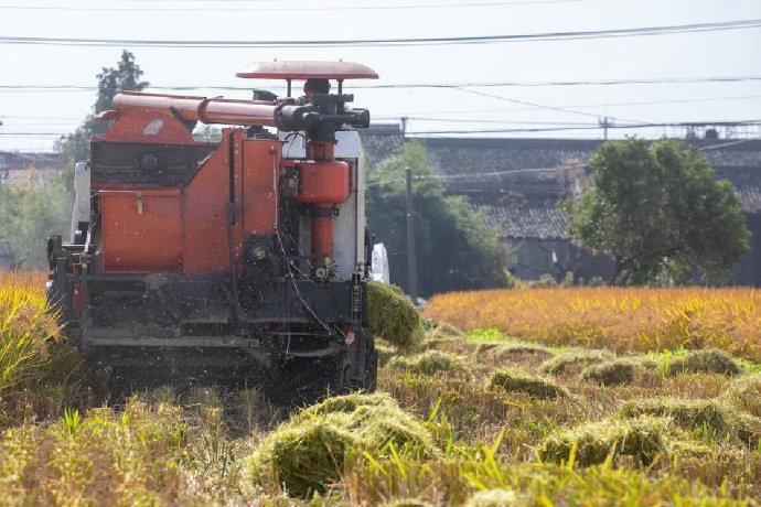 海曙集士港集中回收处理稻秆 有效减少了环境污染