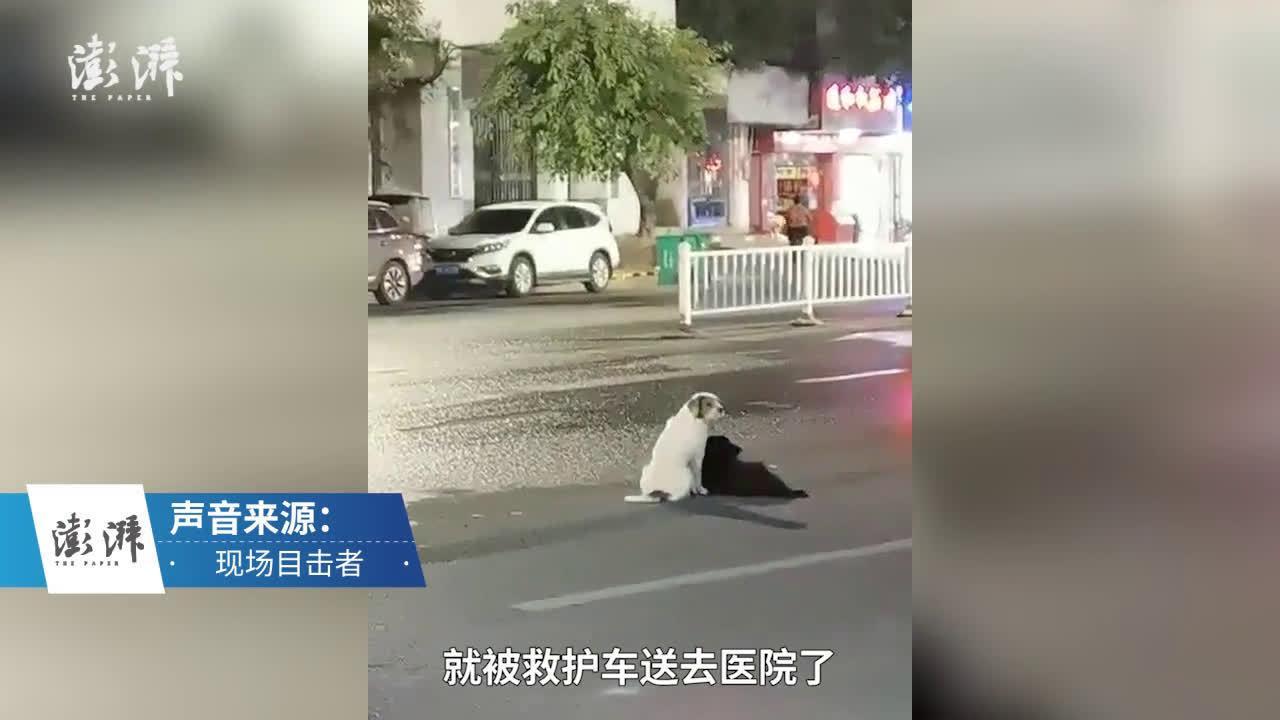 女主人出车祸送医 两只宠物狗路中央苦苦等待