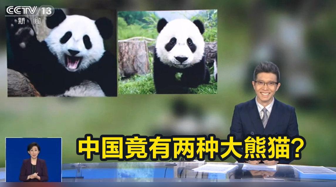 中国有两种大熊猫:一种更像熊,一种更像猫