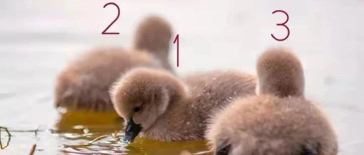 """东湖""""萌宠""""的名字,由你来定丨快为浙农林大小天鹅来取名字吧!"""