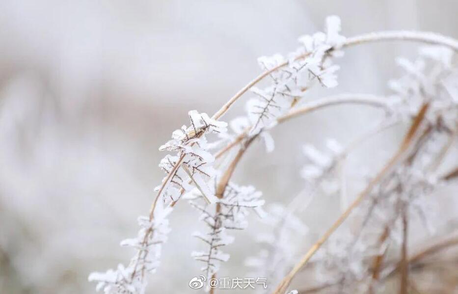 省气象台提示火险3县火险预警升级 超50县(区市)夜间有霜冻