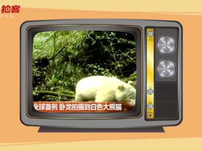 这只全球唯一的白色大熊猫在野外生活艰难么?