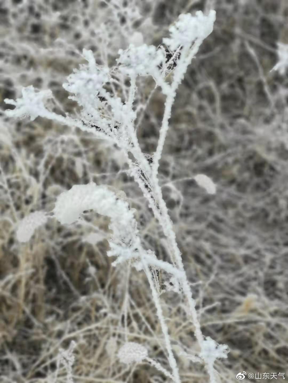 #雾凇# 1月20日#大寒# 节气,德州市庆云县出现能见度小于200米的大雾,并伴有雾凇。(摄影