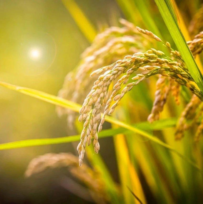 中金化工春季行情展望系列三:农产品涨价,看好旺季化肥景气