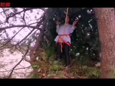 """拍客丨悬崖村""""鸟屋""""成网红打卡地"""