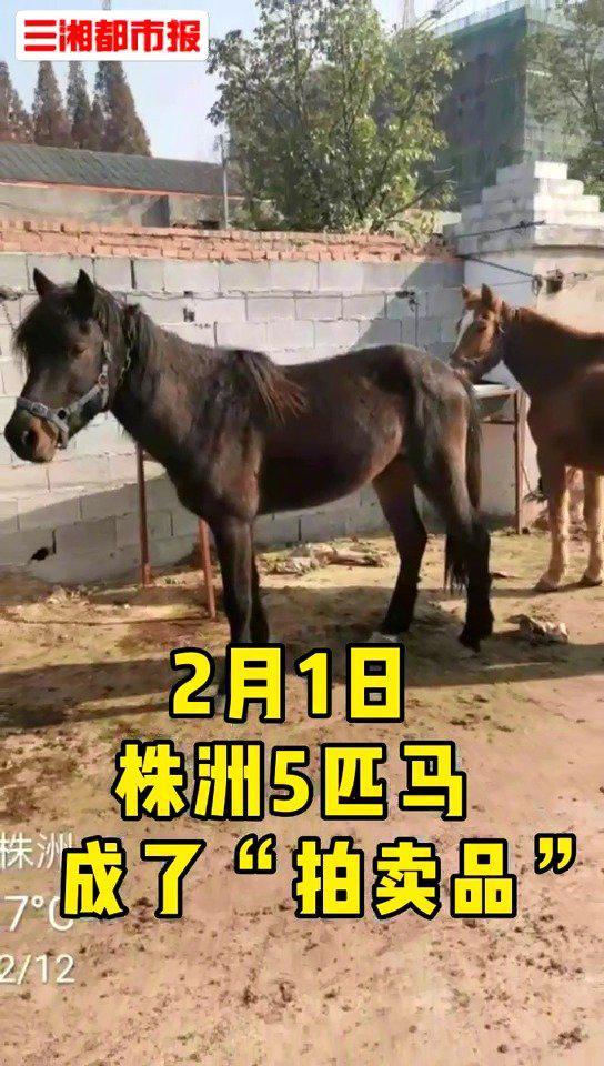 城管拍卖没收的5匹马