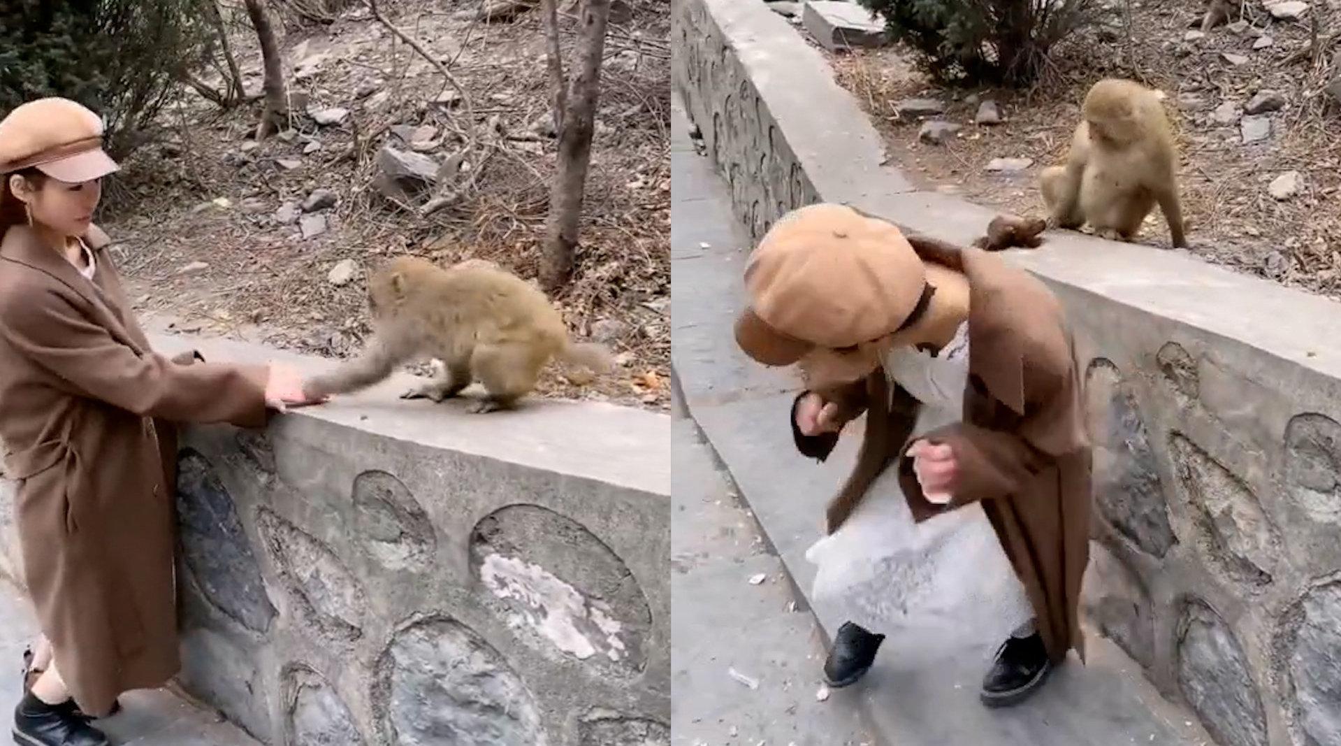女子景区被大猴扯掉假发