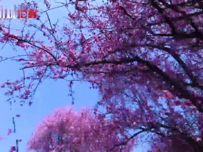 崇州的春天最成都