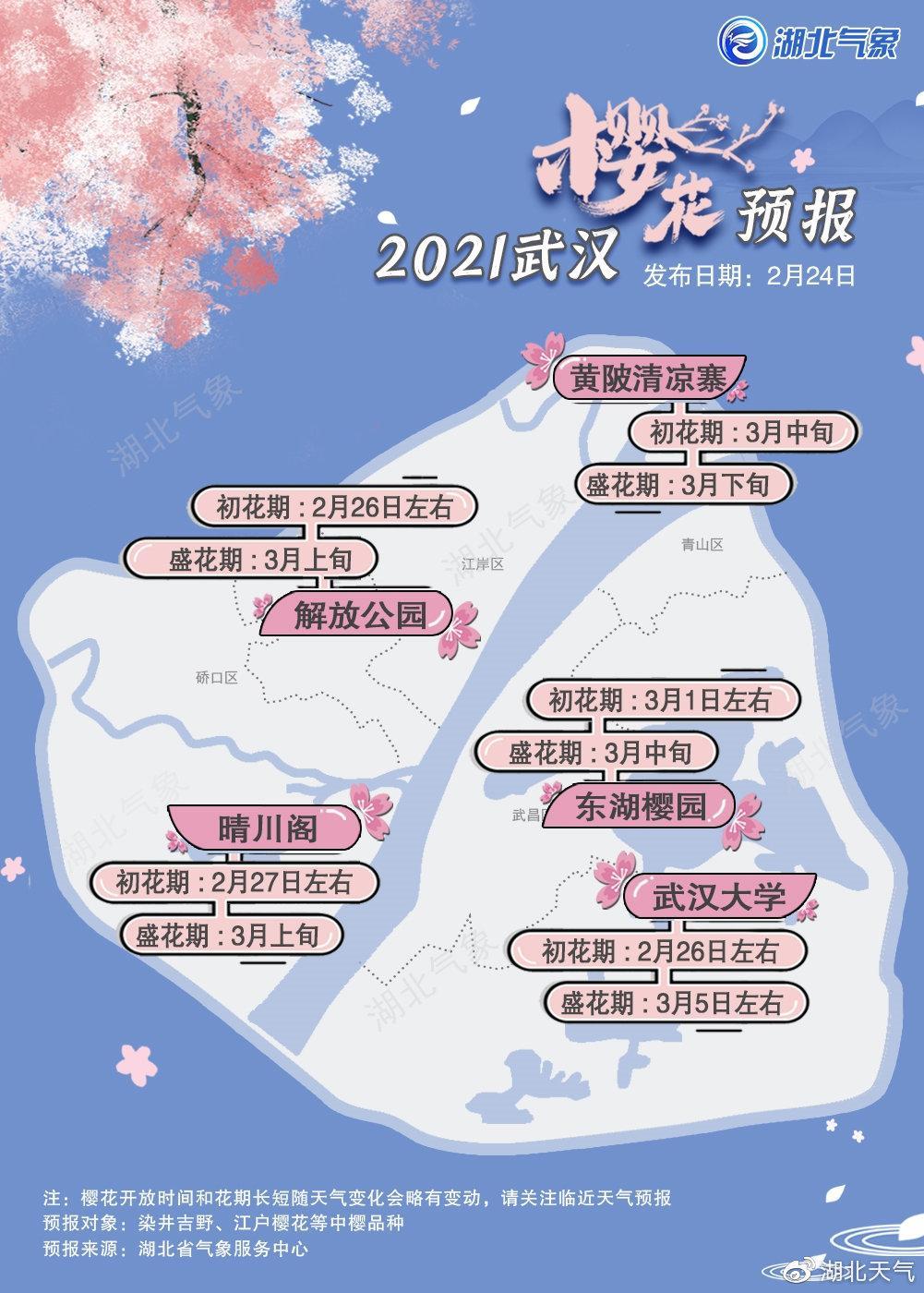 2021年武汉樱花花期预报图