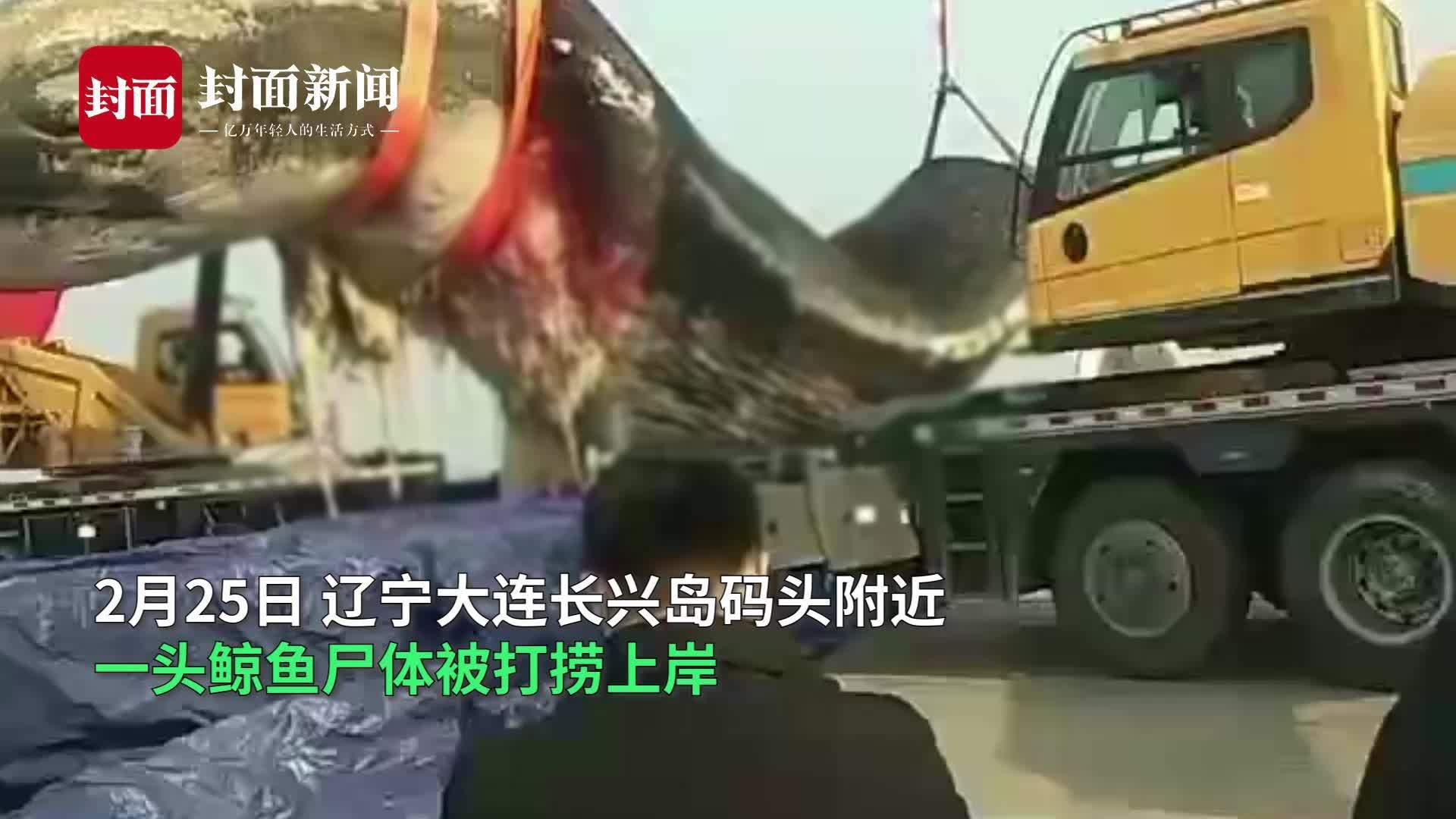 大连长兴岛惊现18米长鲸鱼 死亡多日尸体腐烂被打捞上岸