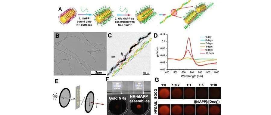 吉林大学化学学院、超分子结构与材料国家重点实验室刘堃教授研究团队在手性纳米材料研究领域取得重要进展