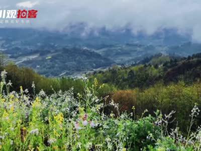 丹棱县青云村:6000余亩李花盛放美不胜收