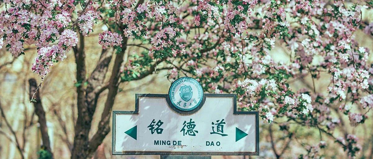 2021天大海棠季明信片投票!快来选出你最钟意的一张~