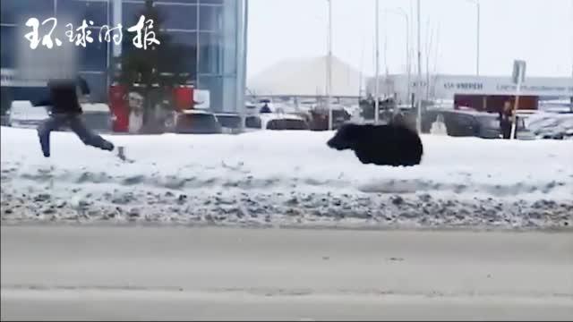 俄罗斯棕熊在街头狂追路人