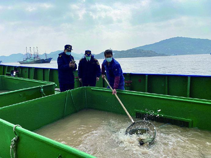 图为海关关员对出口活鱼进行监管。