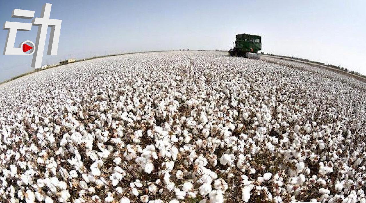 为什么中国棉花不够自用?