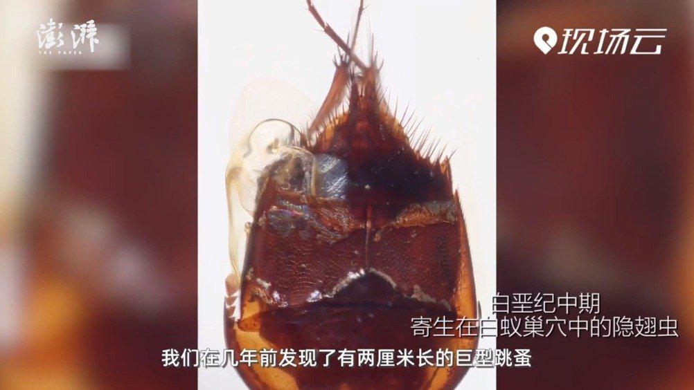 一亿年前昆虫长啥样