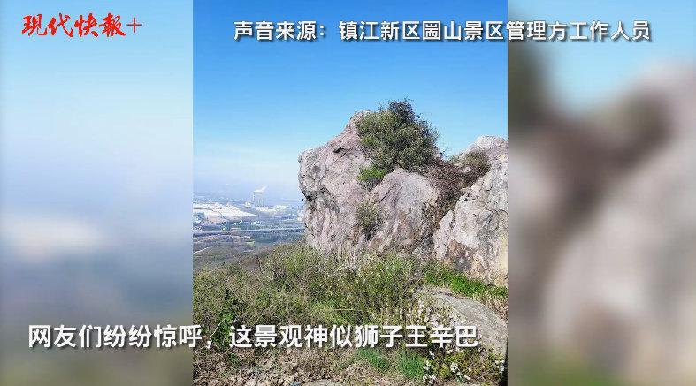 江苏一山头酷似狮子王