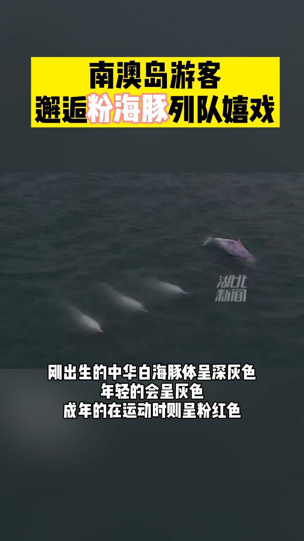 广东现粉色海豚