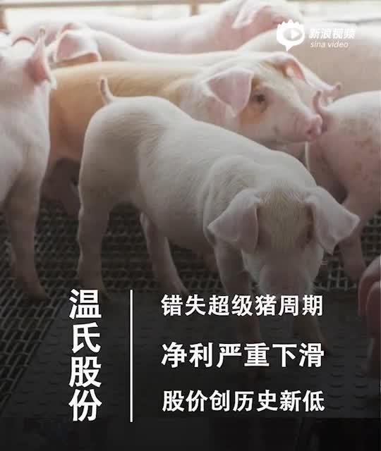 2分钟读财报 温氏股份错失超级猪周期:净利跌46.83% 负债急剧攀升