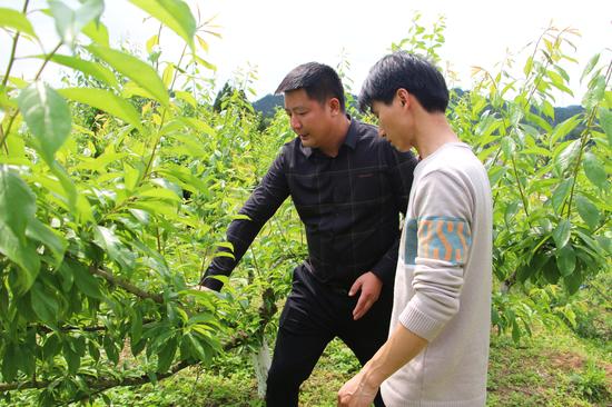 """发展""""农旅+种养"""" 有效助力乡村振兴"""