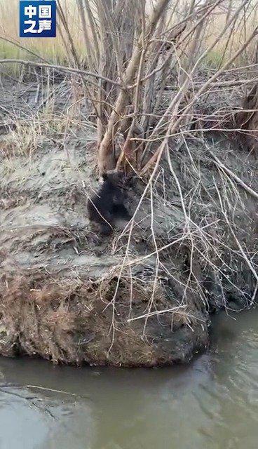 佳木斯发现幼年黑熊