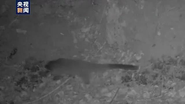 红外相机记录多种野生动物活动轨迹
