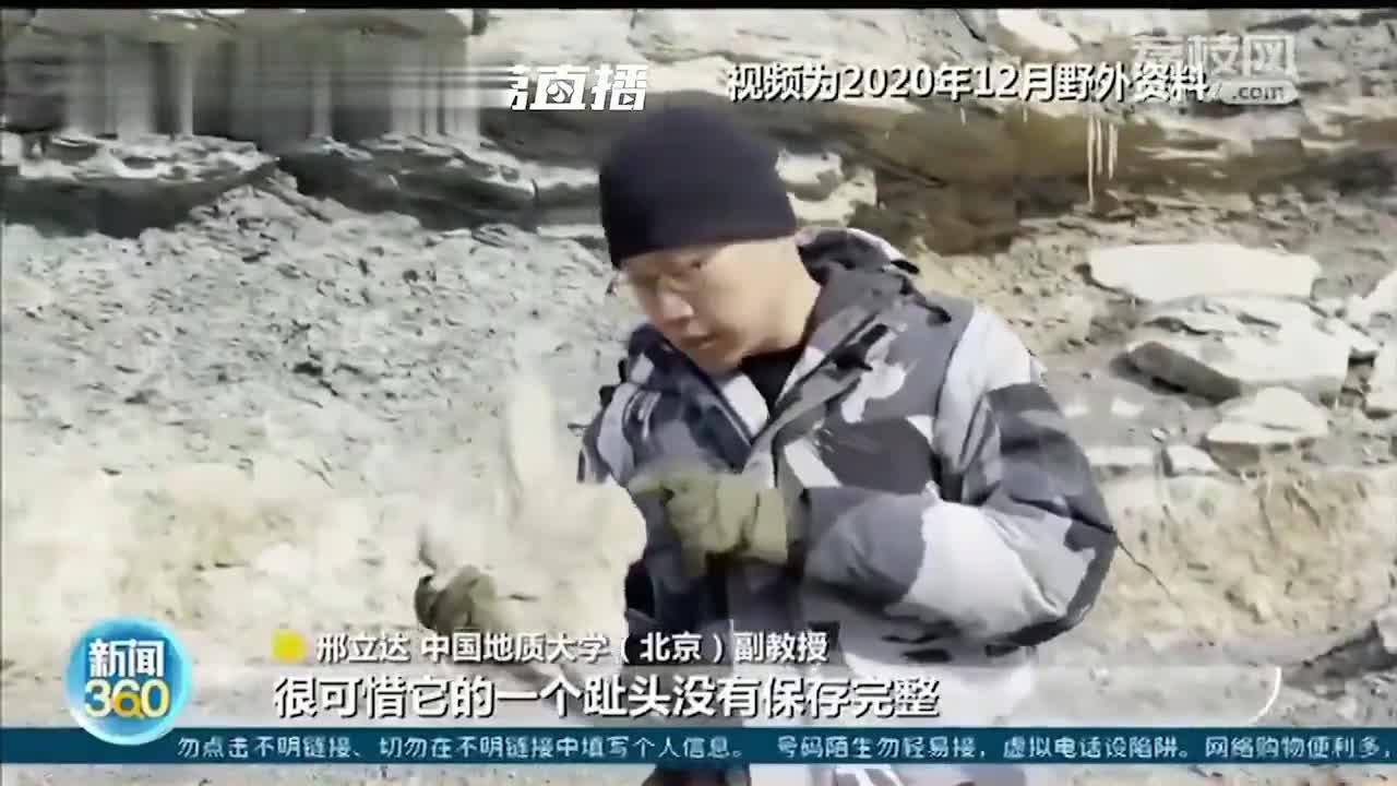 陕西发现侏罗纪肉食龙足迹