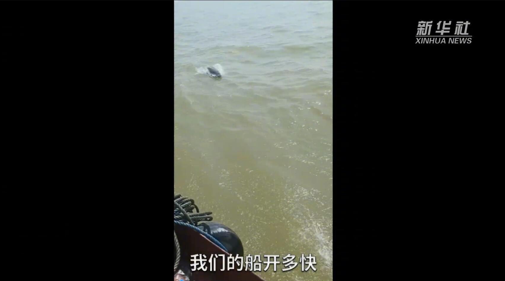 江西鄱阳湖江豚喜逐巡护船