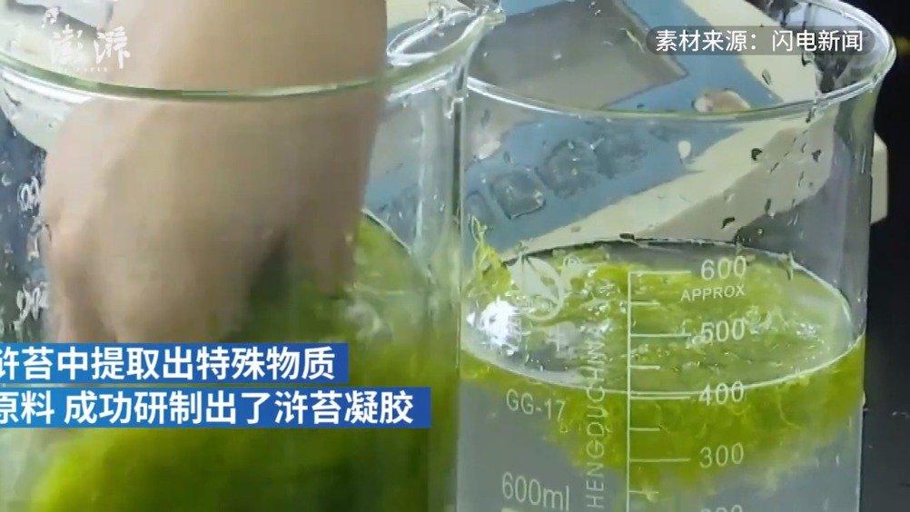 入侵青岛的浒苔可做面膜