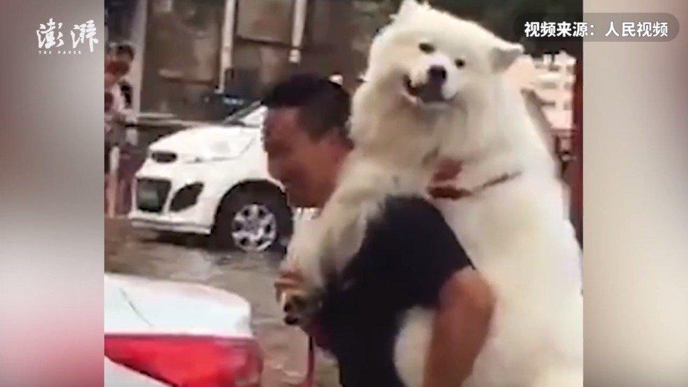男子担心狗子涉水背着趟水走