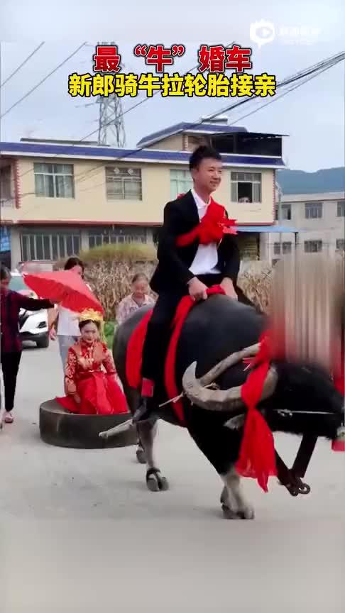 小伙骑牛拉轮胎接亲