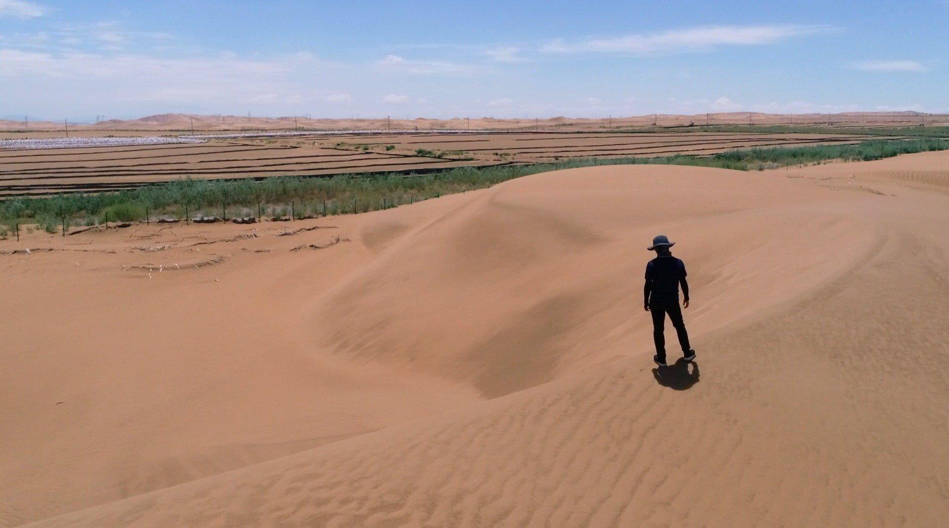 大学教授变沙为土给沙漠换装