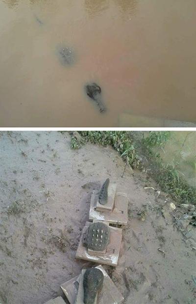 两天后真鳄鱼悄悄把砖踢走自己趴上去了