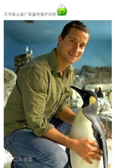 企鹅:我不敢动啊