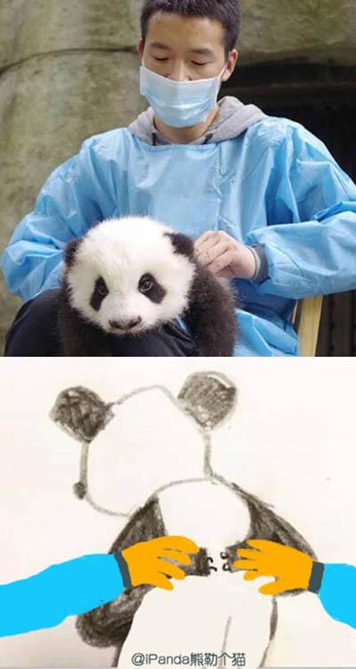 是时候出熊猫本子了