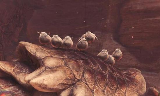 游戏中的柔毛秧鸡