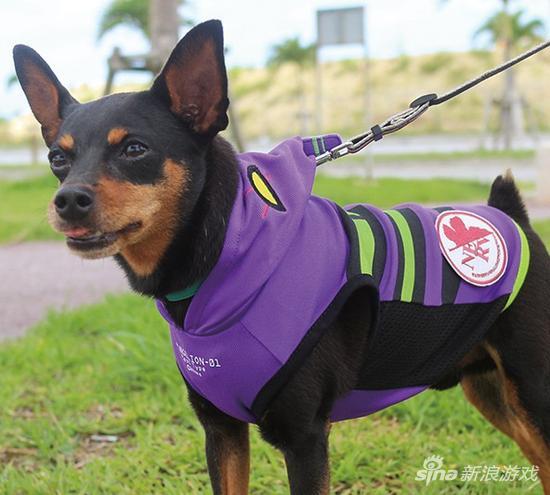《EVA》推出周边宠物防寒服