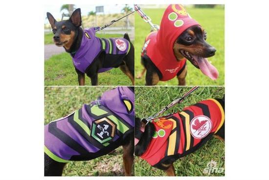 连狗狗的钱都不放过 《eva》推出周边宠物防寒服